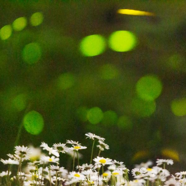 sm 2 fireflies_M4D3238-2.jpg