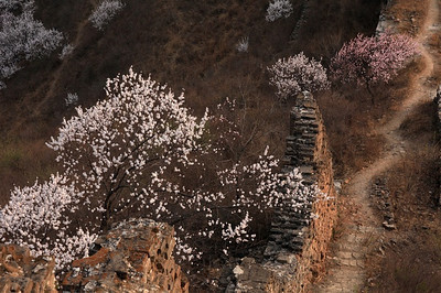 Gubeikou great wall 【early spring】