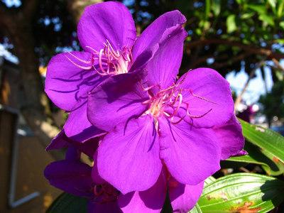 Pro1 Flowers