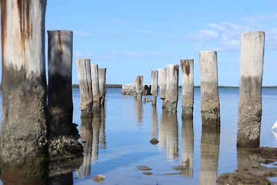 Dunedin FL