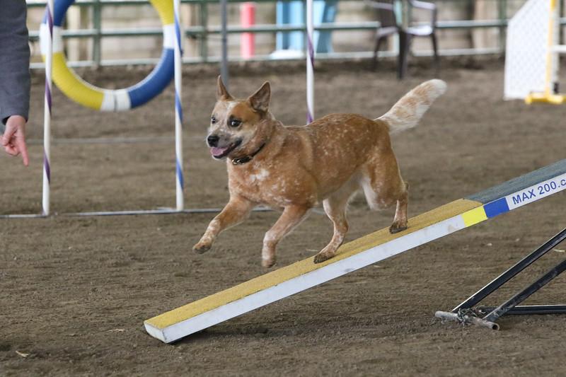 3-10-2019 Bloodhound-9719.jpg
