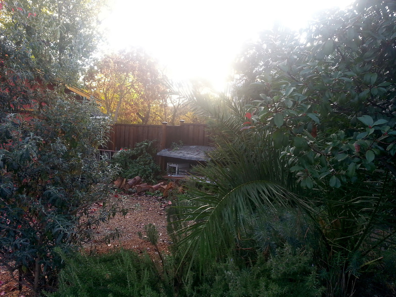 Morning after the BIG 1st rain. All is clear and clean again.