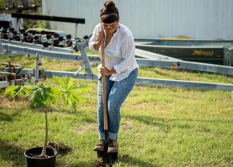 Student Dorothy Peña planting a fruit tree.