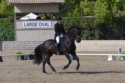 433- Dutch Horsefriends Arjen