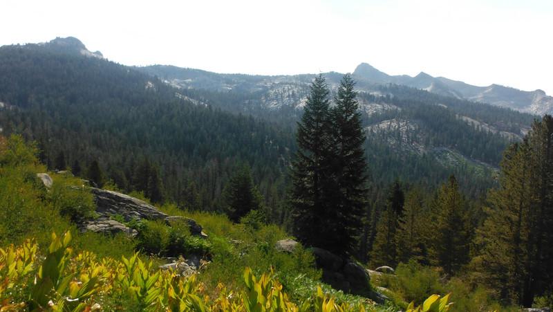 sequoia 134.JPG