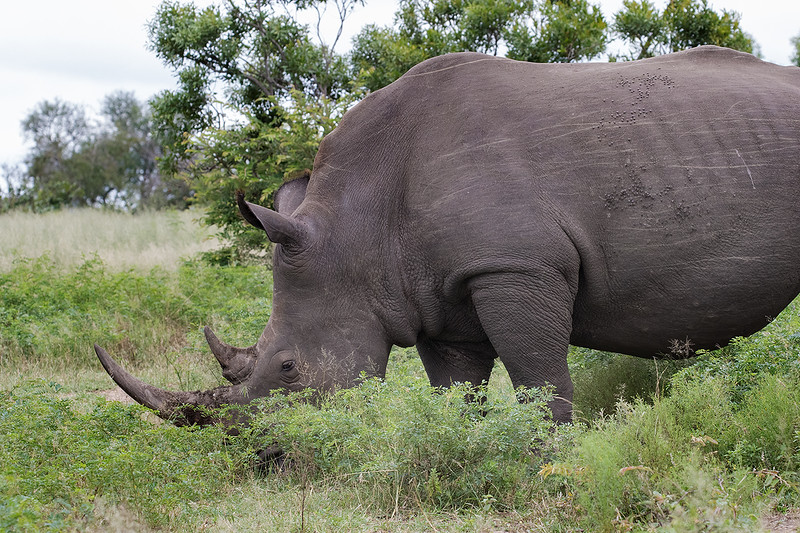 Rhino 1702248898.jpg