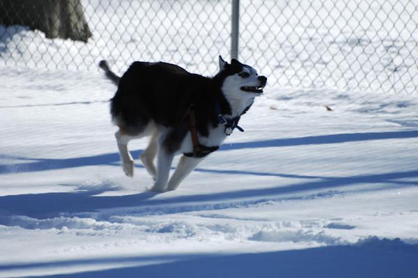 Val - Snow Horsham Dog Park - 1-22-14