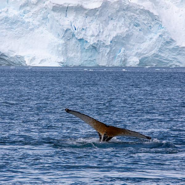 2019_01_Antarktis_03626.jpg