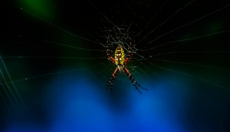 Spiders-Arachnids-146.jpg