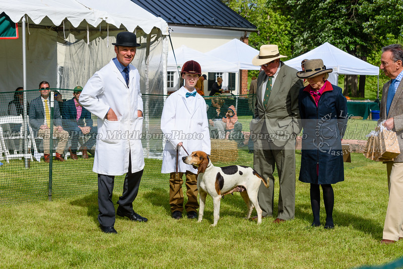 Middleburg Hunt Puppy Show May 7, 2017