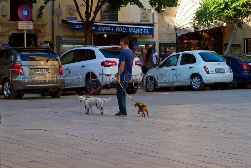Mallorca1 7187.jpg