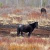 Wild Horse - Alberta