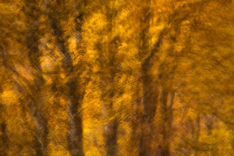 Espíritus del bosque. Gamueta III