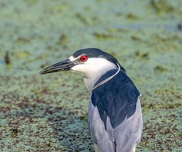 Anahuac National Wildlife Refuge  5-2-19