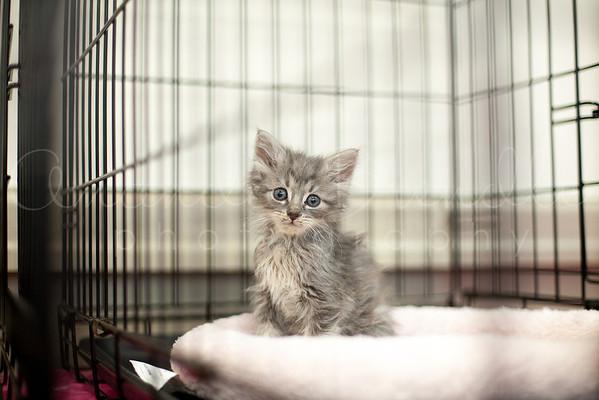 Franklin County Humane Society - Kitten Shower April 2013