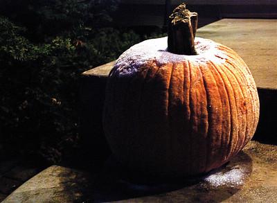 2011 11 23:  Pumpkins, Home, Frost, Sparkling