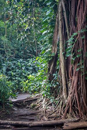 Manoa Falls Layover HI