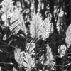 GrassesDamNeckBase-001_BW