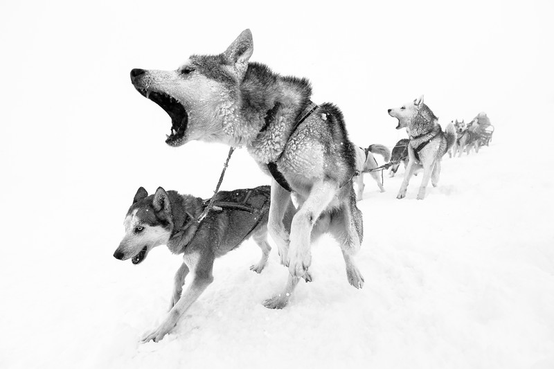 Dogsled1 test print-2.jpg