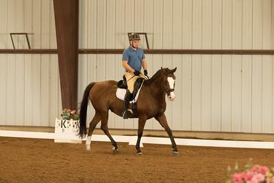 Horse 604