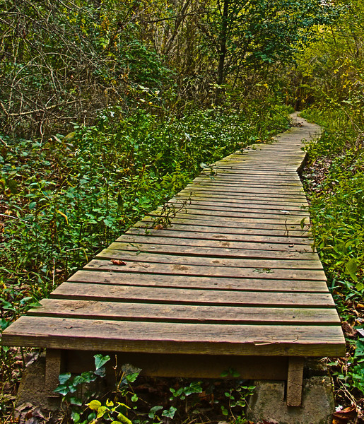 woodenpath.jpg