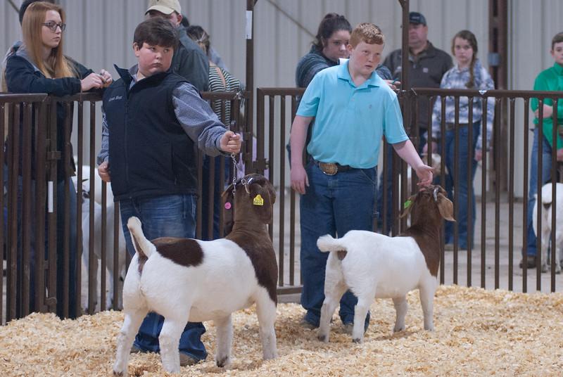 kay_county_showdown_goats_20191207-123.jpg