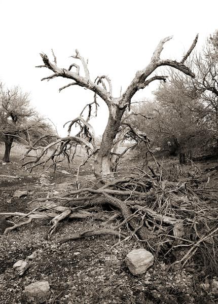 2008-03-29 Dead Tree Llano 3307.jpg