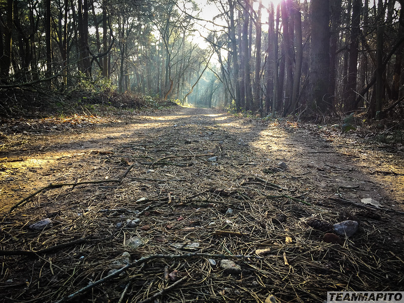 Location_scout_TEAM_MAPITO_Subaru_Day3-11.jpg