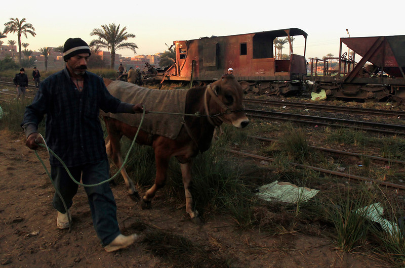 . A man walks his cow beside the wreckage of a military train crash in the Giza neighbourhood of Badrashin, about 40 km (25 miles) west of Cairo, January 15, 2013. A military train carrying young recruits to an army camp derailed in a Cairo suburb on Tuesday, killing 19 people and injuring 107, Egypt\'s health ministry spokesman said.  REUTERS/Mohamed Abd El Ghany