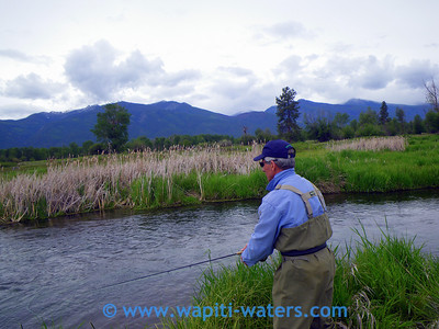 Fly Fishing with Tony Fauci on the Bitterroot