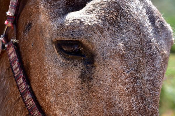 Spain-Javier,  burros y peros