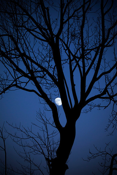 moon and trees IMG_5852.jpg