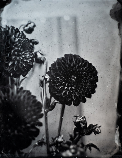 sunflowers (3 of 13).jpg