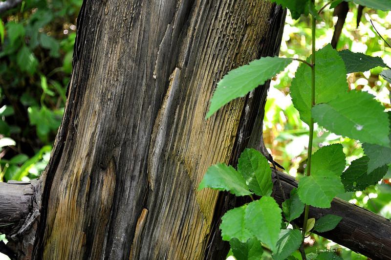 split wood 5-29-2012.jpg
