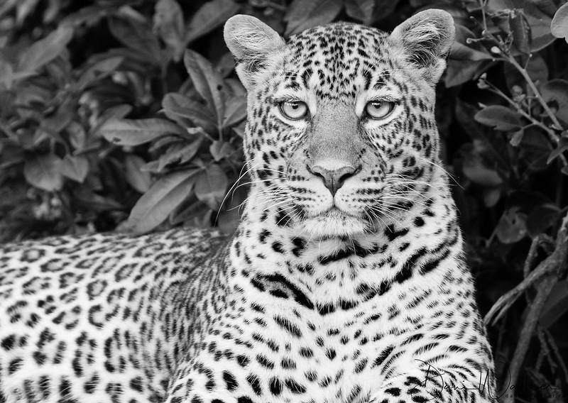 Safari - Jambo