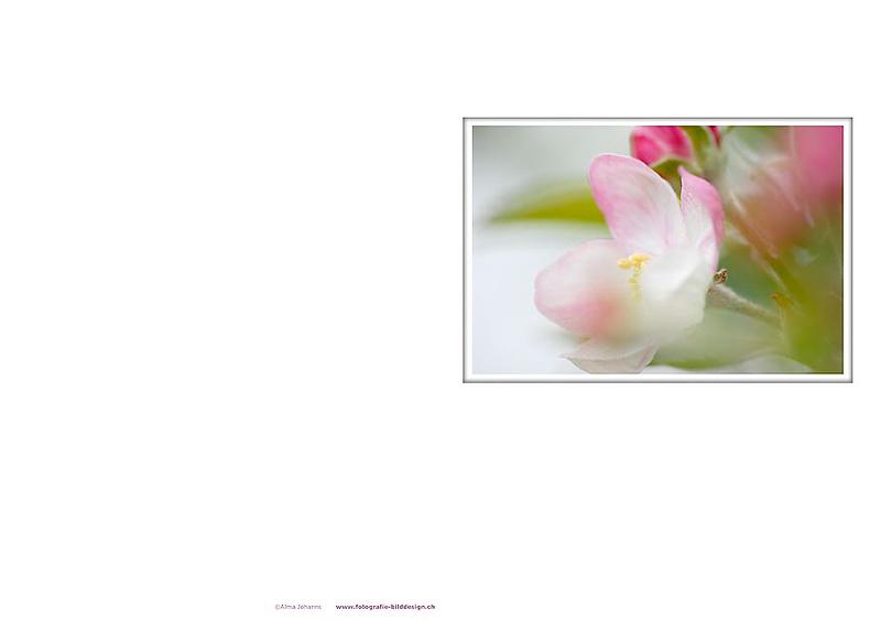 Apfelblüte_A5.jpg
