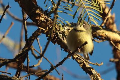 South African Birds 2012