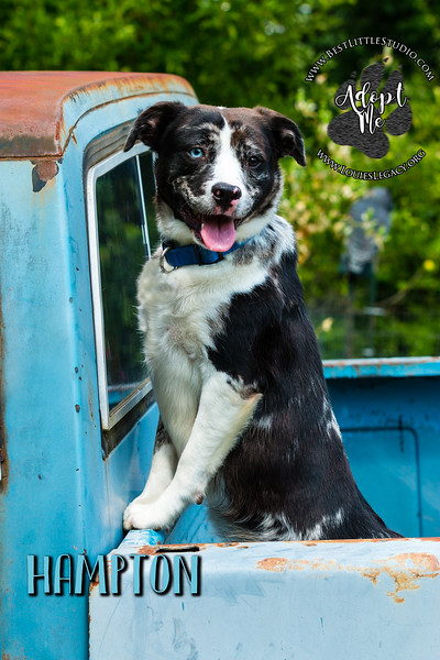Pet Portrait Do's And Don'ts