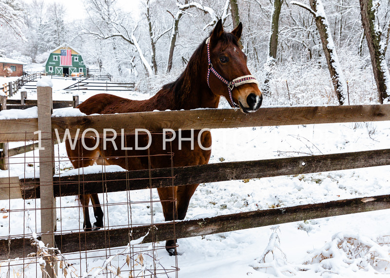 202101032021_1_3 Neighborhood_Horses_Snow_Barn_Trail035--3.jpg