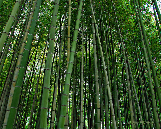 Bamboo & Color