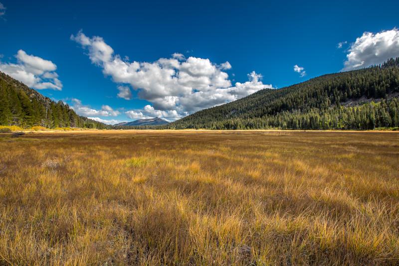 Largeo Meadow on hgwy 89
