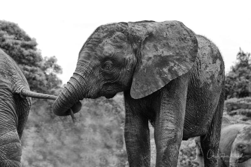 Aug312013_nairobi_blixen_elephant_2410.jpg