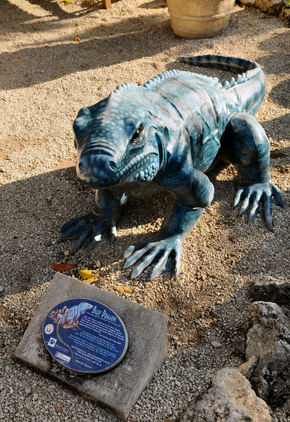 """If Chicago had """"Cows on Parade"""", Grand Cayman had its painted Blue Iguana statues all over the island. The plaque talks about the """"Blue Dragon"""", of which only 30 exist in the wild.  They are only naturally found in Cayman."""