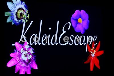 2008 MSFW - Kaliedescape
