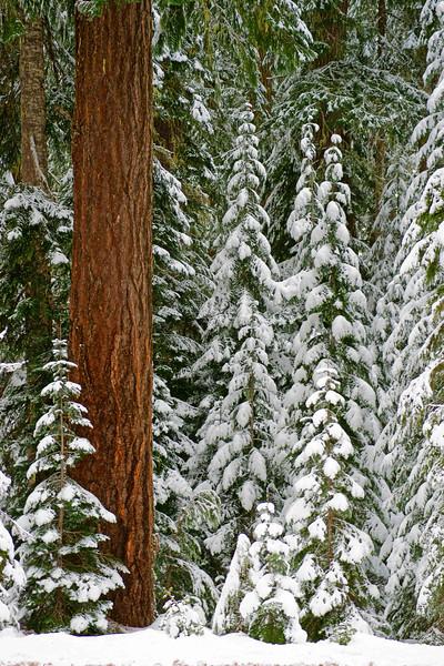 Tree and snow 610 raw sf.jpg
