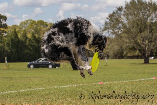 _MG_3219Up_dog_International_2016_StephaniellenPhotography.jpg