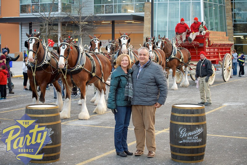 Clydesdale Portraits 350.jpg