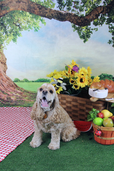 Summer Picnic at North Shore Doggy Day Care