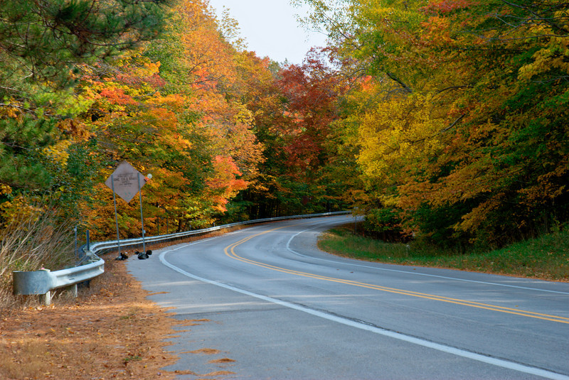HDR shot of the trees and road outside of Empire, Michigan.
