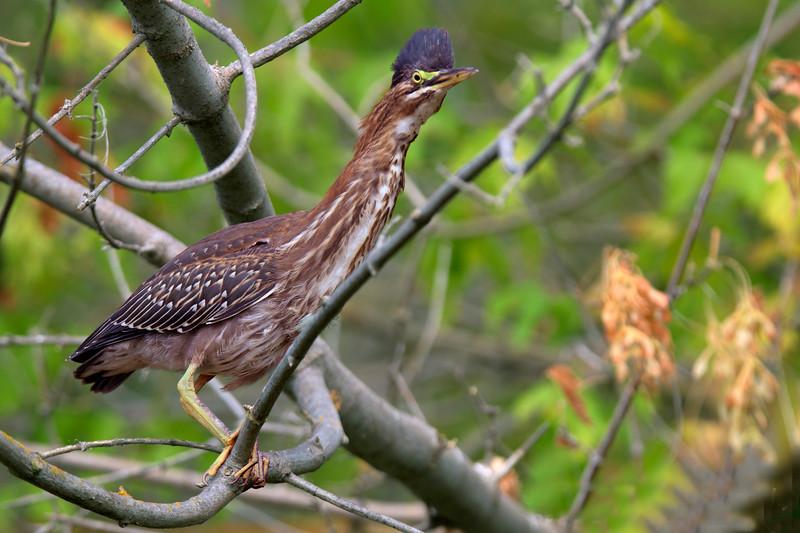 Bird 2_ No C DSC2488.jpg